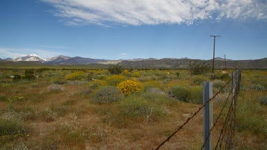 Environmental groups sue DHS over housing project