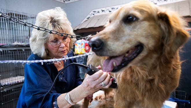 """Toni Maddox trims """"Pumpkin,"""" at Pick of the Litter Pet Parlor on Tuesday, April 4, 2017. Maddox has been running her dog grooming business for 30 years."""