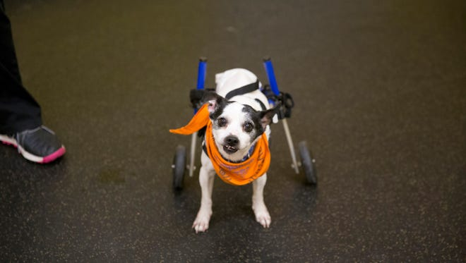 Half Moon has no use of his back legs, and he needs his cart to get around.