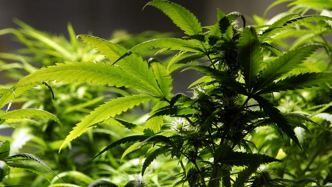 Marijuana businesses may soon open in the city of Palm Desert, including along El Paseo.