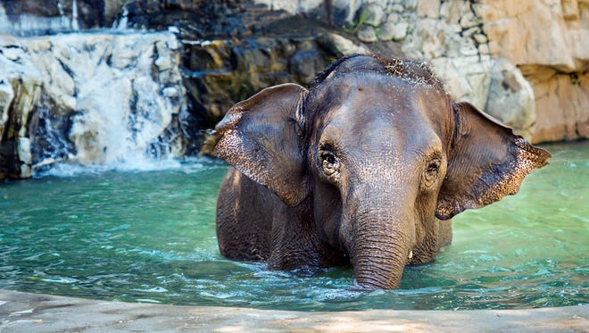 World Elephant Day festivities are happening all weekend long.