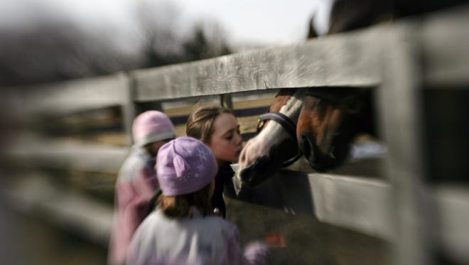 On location at the Groose Pointe Hunt Club on Cook Rd. in Grosse Pointe Woods, Madison Frame, 11, of Grosse Pointe Woods, reaches in to give a birthday kiss to Jazzy,the pony, who turned 11 on Sunday, March 5, 2006. She was there with the other girls who own the pony, Mary Frame, 5, of Grosse Pointe Woods, McKenzie Frame, 8, of Grosse Pointe Woods, and Hannah Trout, 9 , of Grosse Pointe Farms. John Trout who gave the pony to the girls took them there to give Jazzy carrots. Sierra, the darker horse was reaping the benefits of Jazzy's birthday.SUSAN TUSA/Detroit Free Press