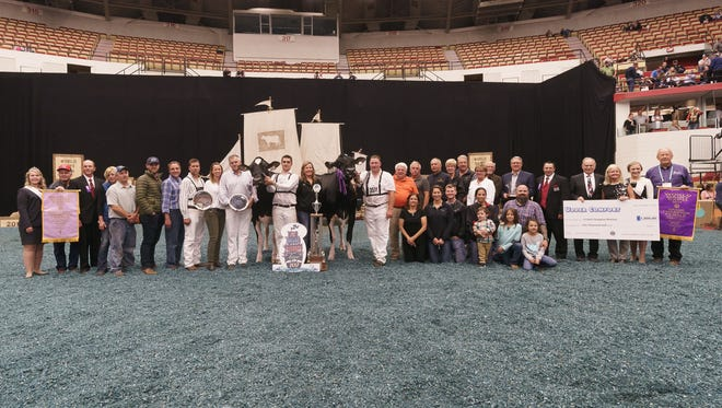 Wisconsin breeders win Grand Champion and Reserve Grand Champion Females in the International Holstein Show