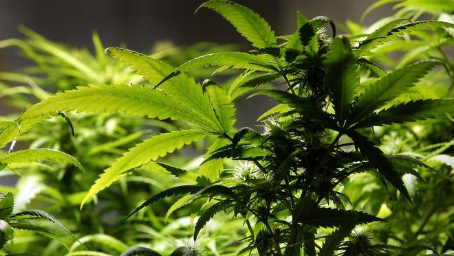 A reader describes how a form of cannabis has eased his debilitating medical condition.