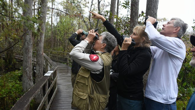 "A find! Birders peer intently into the forest. An ""early bird"" birdwatching walk is just one of many ways to experience the natural beauty of the Corkscrew Swamp Sanctuary."