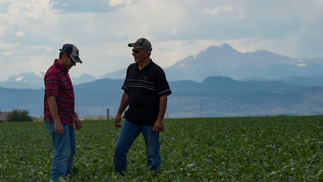 Father and son farmers Paul, right, and Scott Schlagel stand in one of their sugar beet fields on Wednesday, June 27, 2018, at the Schlagels farm in Longmont, Colo.