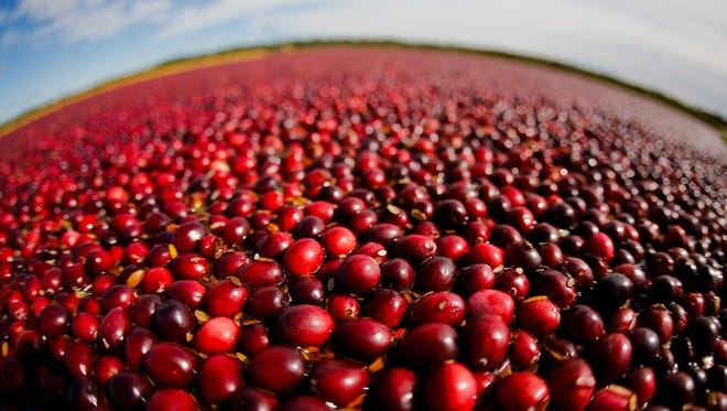 Cranberries float in a marsh near Warrens in western Wisconsin, waiting to be harvested.