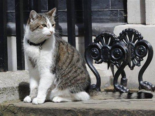 Larry.the.Cat.3