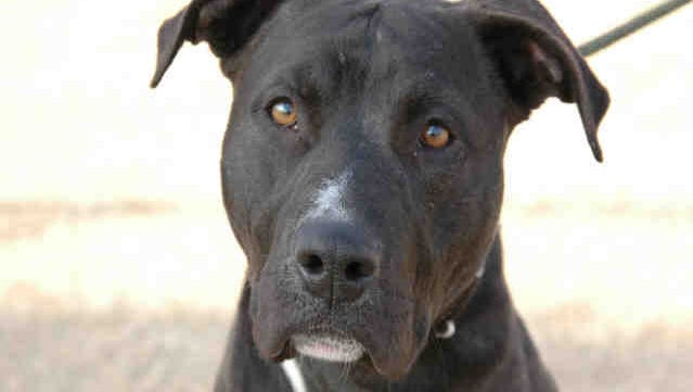 Ripley is a rambunctious pooch who will need an active owner and lots of room in the backyard.