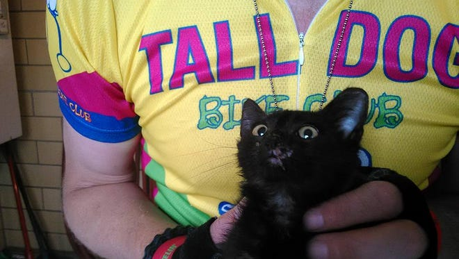 "The kitten now known as ""Stormy"" nearly died on RAGBRAI's first day."