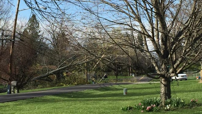 High winds took down many area trees and power lines, including this one at Garwood Road and South C Street in Richmond.