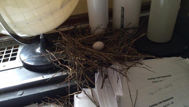 After a window was left open over the weekend, teacher Liz Foran returned to find a pigeon's nest.