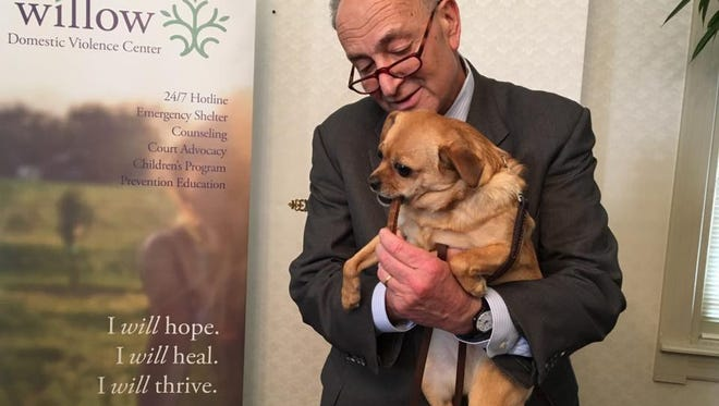 Senator Charles Schumer holds Bella Chihuahua at a press conference to show his support for the The Protect Pets and Women from Domestic Violence, or PAWS Act, at the Willow Center on Wednesday.