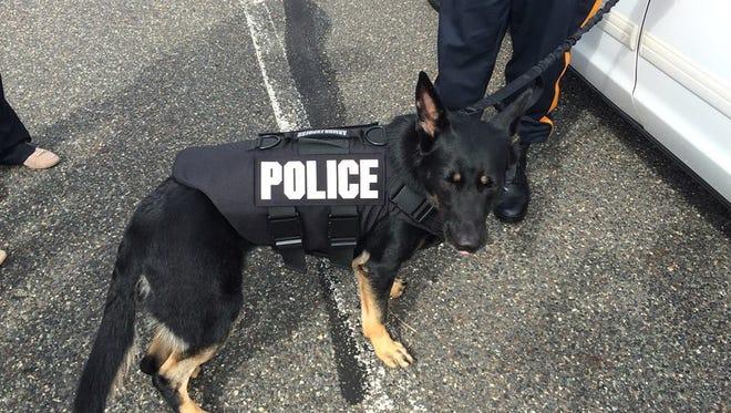 Mount Laurel Police Department K-9 officer Nina wears her new bulletproof protective vest.