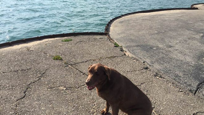 Cameron, an 11-year-old chocolate lab, went missing from the Port Sanilac boat launch July 28.