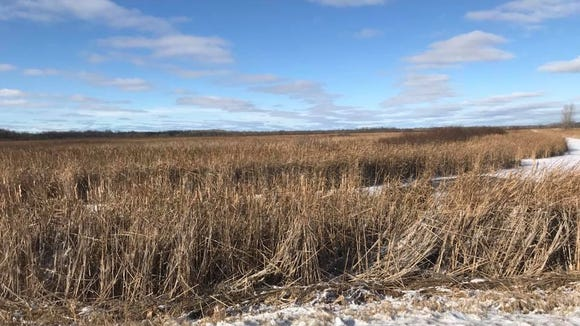 The Oconto Marsh, located alongside the Green Bay north of Oconto, consists of more than 928 acres of wetlands.