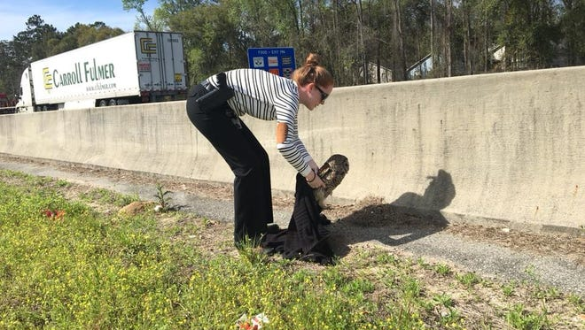 An earlier injured owl was rescued from the side of I-10 by LCSO Detective Emily Shaw.