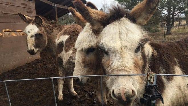About 100 animals were seized from a home in Otsego County.