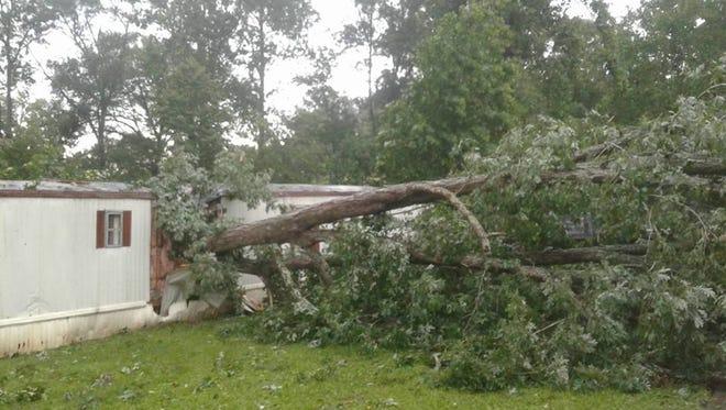 A huge oak crushes a trailer near Pickens after a June 24 tornado.