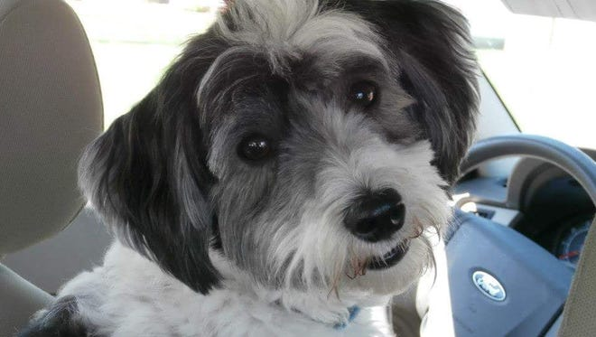 Murphy, a 6-year-old Havanese, died after being attacked at the DeWitt dog park July 8, 2018.