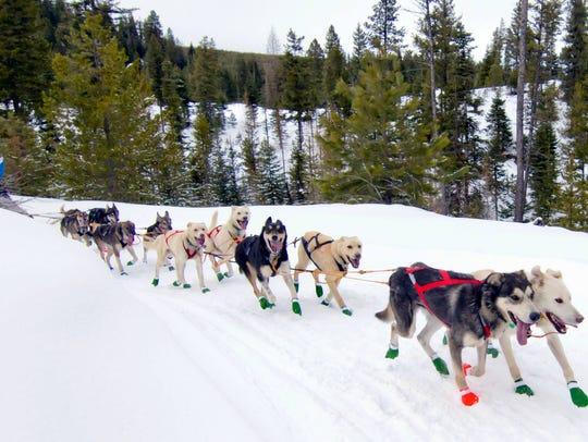 Brett Bruggeman and his dogs will be in Alaska soon