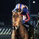 The Great War, shown winning Turfway Park's 96Rock Stakes on Jan. 31, was last in Saturday's night Battaglia and declared off the Kentucky Derby trail.