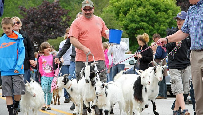 Goats and their handlers march down Wisconsin 42 in Sister Bay during last year's Roofing of the Goats Parade.