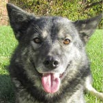Mayah is available for adoption at Animal Welfare League.
