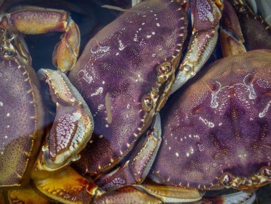 Dungeness crabs.