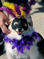 Sherrone Boudreau adjusts the mask for Sunshine, her 1-year-old Pomeranian. Sunshine was voted Queen for the Krewe of Barkus parade at Camp Barkley Saturday.