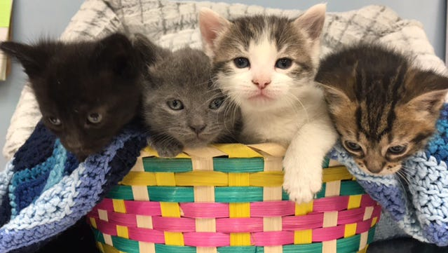 Between 3,000 and 4,000 cats and kittens we arrive each year at the Cumberland County SPCA shelter.