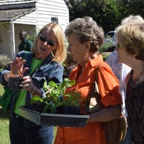 Abbie Luck (left), tells Jo Fowler (center) and Janet Pufahl about uses for the herb bright lights Swiss chard. They were attending Kent Plantation House's annual Fall Herb Day.