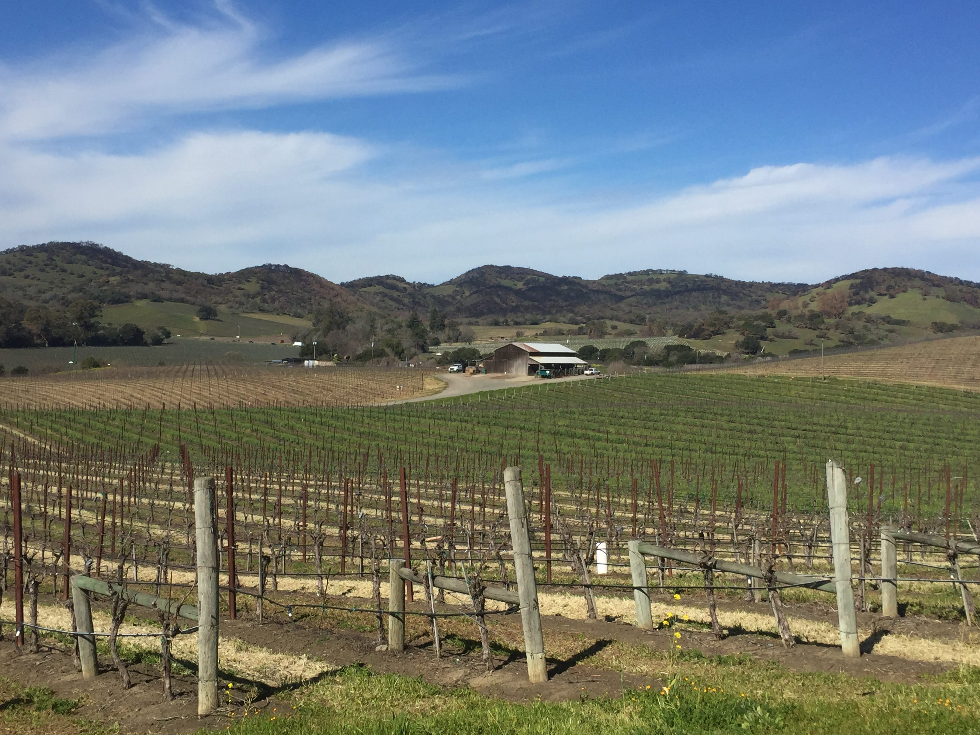 6 months after wildfires, California wine country is open