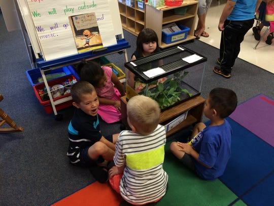 Students in Katie Campbell's kindergarten class at