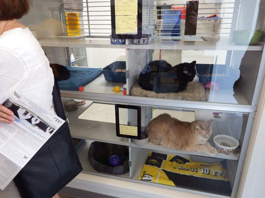 Iowa City residents got a glimpse of the new Iowa City Animal Care and Adoption Center, and all its furry residents, during an open house on Saturday, Sept. 26, 2015.