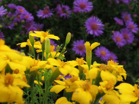 Enjoy the beauty of your garden in fall while taking