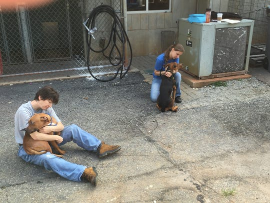 Dogs that have been displaced by floods wait to be transported from Greenville County Animal Care to Brother Wolf Animal Rescue in Asheville Friday.