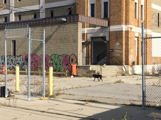 A stray pit bull guards the former American Motors headquarters in Detroit on Oct. 23, 2015.
