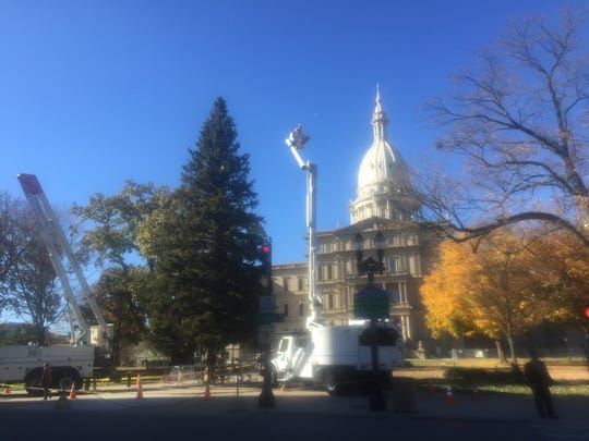 Workers began stringing lights on a 66-foot Christmas tree today at the state Capitol.