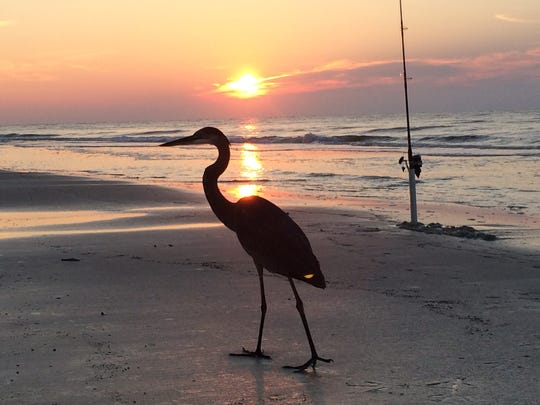 Chuck Reese sent this photo from a recent surf fishing