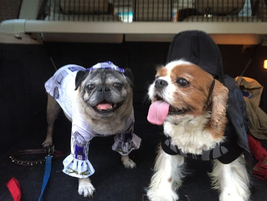 Elizabeth Ricci and Neil Rambana's dogs, dressed as