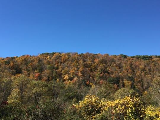 Dull fall colors on Tioga County hillside, October