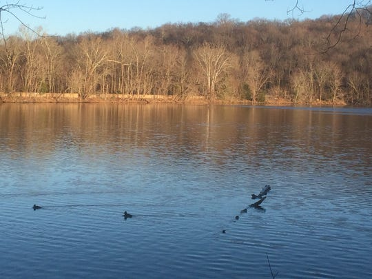 Volunteers walked around Radnor Lake State Natural Area searching for birds during the annual Christmas Bird Count.