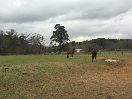 Horses graze in a pasture at Holly Hills Farm in Benton.