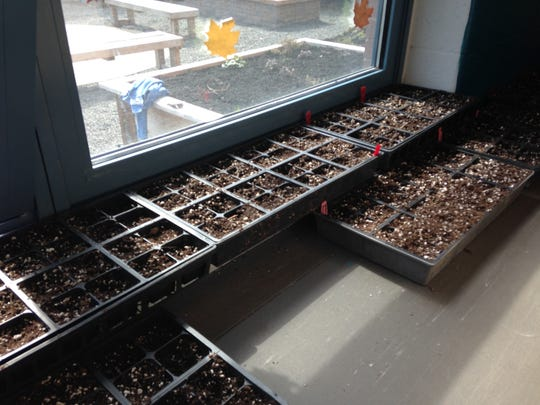 Bullock School students spent Monday and Tuesday in the STEAM lab starting plants from seed for its school garden.