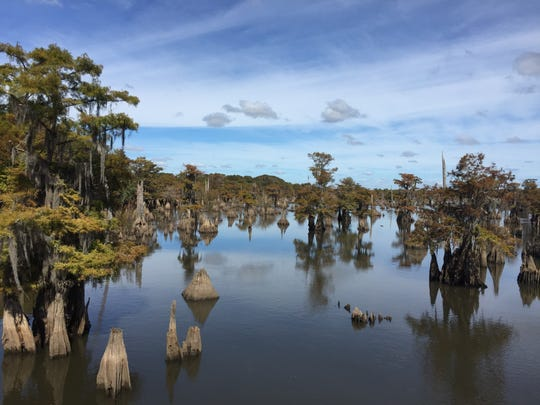 The Dead Lakes section of the Chipola River, a prized fishing spot, is located within an area set for seismic testing for oil and gas. The testing, however, will be conducted on land.