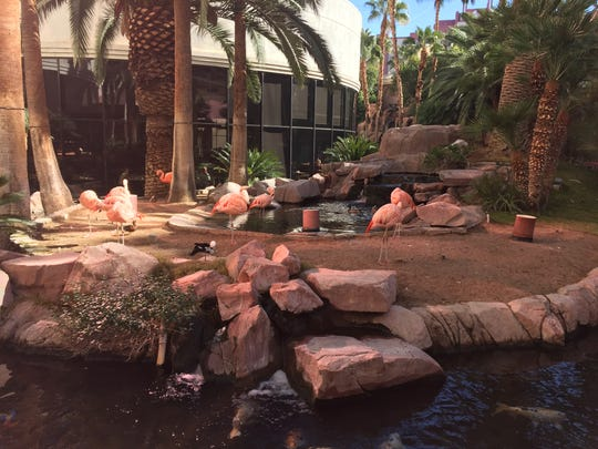 Flamingos fluting at the Flamingo Las Vegas Hotel &