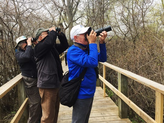 Sophia Morton of Cuyahoga Falls, left, and Ron Davis of Bath, Mich., watch a Baltimore oriole while Steve Clark of Kent, Washington, watches a yellow warbler at Magee Marsh Wildlife Area.