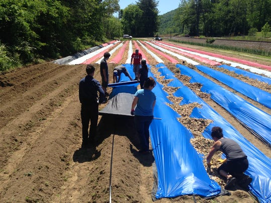 Volunteers lay blue plastic sheeting down in the American Flag garden at the Veterans Healing Farm in Hendersonville. The nonprofit will donate the produce it grows to the patients at the Charles George VA Medical Center.