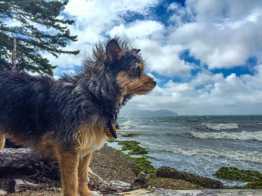 Jamie watches the waves at Barview Jetty Park in Garibaldi.